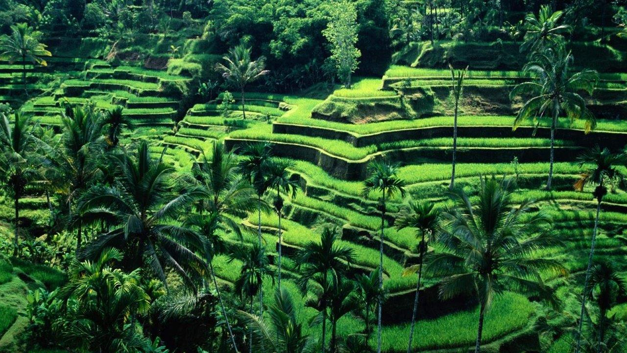 Endonezya Yurtdışı Kargo Gönderimi - Evrak | Koli | Numune