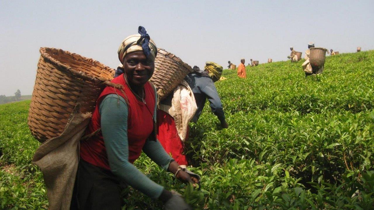 Kamerun Yurtdışı Kargo Gönderimi - Evrak | Koli | Numune