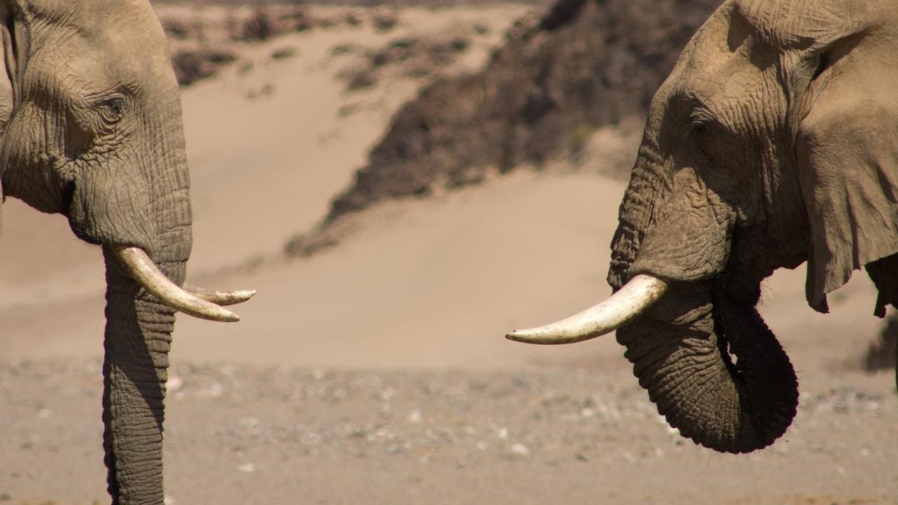 Namibya Yurtdışı Kargo Gönderimi - Evrak | Koli | Numune